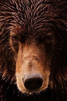grizzly bear                                                                                                                                                     Plus