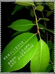 Resilience: Grow, Learn, and Overcome | Park Ridge Psychological Services