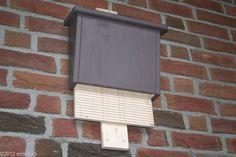 xxxxxx - DIY-Bauanleitung für einen wartungsfreien Fledermauskasten