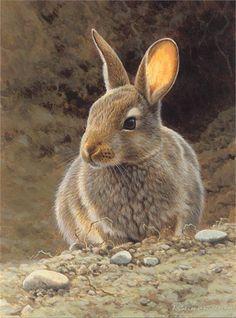 Rabbit Illustration, Wildlife Images © Andrew Hutchinson