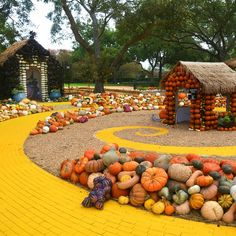 Dallas Arboretum and Botanical Garden pumpkins