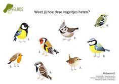 Test je kennis over tuinvogels! - Speelbos Gilze Kinds Of Birds, Reggio Emilia, Fauna, Pet Birds, Kids Playing, Kindergarten, Crafts For Kids, Sketches, Scouting