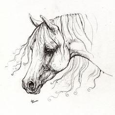 drawings horses arabian horse drawing 13 drawing arabian horse drawing 13 fine art. Black Bedroom Furniture Sets. Home Design Ideas