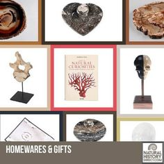 Home Decor Collection - Shop the collection, website updated daily, click here now www.NaturalHistoryDirect.com