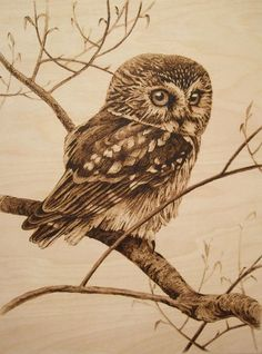 cm - owl - pyrography by Lesina Elena Wood Burning Crafts, Wood Burning Patterns, Wood Burning Art, Wood Crafts, Animal Sketches, Animal Drawings, Wood Burn Designs, Painted Driftwood, Pyrography Patterns