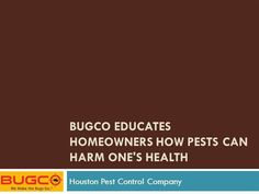 BUGCO Educates Homeowners how Pests Can Harm One's Ppt Presentatio..