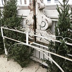 Greens are rolling in from Canada ... packing our white Ram sleigh for #hobnobmarket !!! #freshevergreens #stylistsofinstagram #dreamjob #supportyourmomandpop #shopsmallbusiness #savvycityfarmerstyle