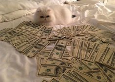 Cashcats.biz= All photos of cats with cash...