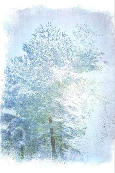 Evergreen Trees In Ice and Snow, print by Suzanne Powers $22.00