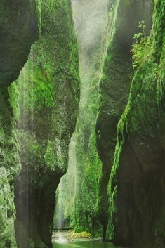 Oneonta Gorge, Oregon, USA......very shallow water, field trip in art school, I fell down about 6 times....memories...