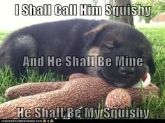funny dog pictures - I Has A Hotdog: My Squishy...