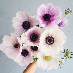 Thursday flowers!!! Tomorrow afternoon is sooo the weekend!!! #anemoneflowers #sopretty #mumsinbusiness #mumslife #mumsandbubs #itsamumslife #mumsinbusiness #mumswithhustle #girlboss #mumssupportingmums #womansupportingwomen #instababies #handmade #handmadelover #supporthandmade #supportsmallbusiness #necklace #mumnecklace #mummajewellery