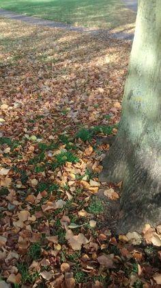 Autumn in Shrewsbury