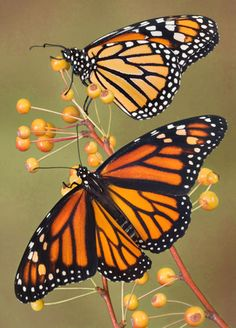 Monarch Butterflies: by Cathy Keifer Butterflies, everywhere! Sketched, painted, and stitched. I see butterflies and I think of you...
