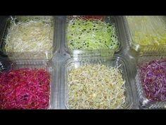 Germinated Seeds تنبيت الحلبة و السمسم و الحنطة السوداء ( الجزء الثاني ) - YouTube