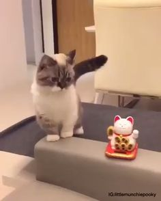 Funny animal videos, funny animal pictures, cool cats, i love cats, crazy Cute Funny Animals, Cute Baby Animals, Funny Cute, Animals And Pets, Funny Cat Faces, Super Funny, Hilarious, Cute Kittens, Funny Kitties