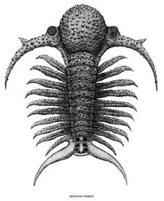 Deiphon is a Silurian trilobite which had long, conical spines on its body. It had a very large, round glabella, or middle cheek. Some scientists believe the glabella was filled with fat or oil, to keep the trilobite buoyant. But others think Deiphon was predatory and that it stored prey inside the glabella.