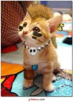 I'm going to do this to my cat!! LoL