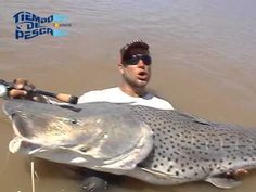 Mississippi Paddlefish Sometimes Referred To As Spoonbill