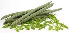 Alors que le moringa oleifera reste relativement inconnu en Occident, il a développé une réputation dans ses terres natales pour sa valeur nutritive exceptionnellementélevée. Cet arbre, qui est également nommé «l'arbre àraifort», a de minuscules feuilles arrondies qui sont abondantes enun très grand nombre de nutriments: Calcium, protéines, vitamine C, bêta-carotène, potassium. Cela explique la …