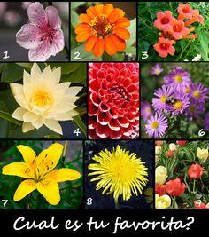 Fotos bonitas de flores y rosas y para ti cual es la mas favorita. Una rosa es la flor del rosal, de pétalos grandes en forma de corazón, espinas en el tal