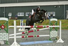 This 15.0hh fifteen-year-old black #mare could be the #allrounder for you | For #sale on #HorseDeals