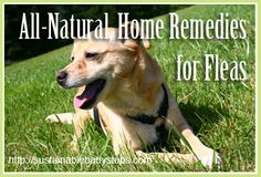 DIY Natural Flea Remedies - just be careful to follow the instructions & be extra cautious using any essential oils around your cats!