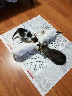 Kittens at dinner time!:*-)