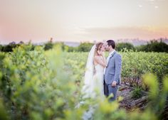 Sunset over the blueberry fields. Photo by Willa Kveta Photography