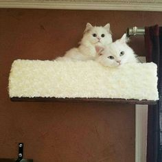 Darcy Miller added a photo of their purchase Cat Bunk Beds, Bed Shelves, Shelf, Cat Wall Furniture, Cat Towers, How To Clean Furniture, Small Cat, Scratching Post, Cat Love