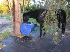 to keep feed off the ground and the bucket from being kicked across the pasture.
