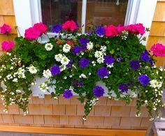 Nantucket Window Boxes and Containers for your Nantucket Home - Garden Plants Container Flowers, Flower Planters, Container Plants, Container Gardening, Succulent Containers, Fall Planters, Vegetable Gardening, Organic Gardening, Window Box Flowers