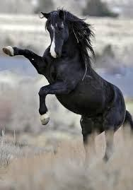 The wind of heaven is that which blows between a horse's ears.