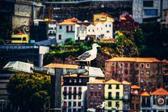 Porto (Portugal) | par TOine BzX