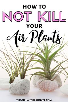 Is your air plant looking a little under the weather? Find out how to better care for it with these air plant care tips!!! Air Plants Care | Air Plant Care Instructions | Tillandsia Air Plant Care | Air Plants Care How to Grow |  Air Plants Care Water | Air Plant Care Tips | Air Plant Care Ideas | Hanging Air Plants Care | Bulbosa Air Plant Care |