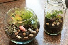 The old canning jar or the dollar fish tank from the garage sale would make great terrariums for the kids and their small farm animals could have new homes!