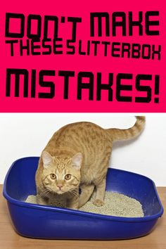 Does this situation sound familiar? You head to your kitty's litterbox to scoop it out and discover that she's decided to go to the bathroom elsewhere. How frustrating! But don't blame your cat just yet  Get the scoop on common litterbox mistakes you may be making — and how to fix them.  CLICK HERE ==> https://www.dailyoffersandsteals.com/blogs/daily-offers-and-steals-blog/dont-make-these-5-litterbox-mistakes