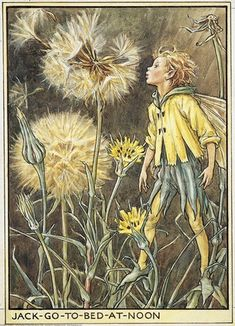 Illustration for the Jack-to-to-bed-at-noon Fairy from Flower Fairies of the Wayside. A boy fairy stands facing right, blowing at the down on the flower head.    Author / Illustrator  Cicely Mary Barker
