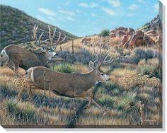 This framed Running Mule Deer Print features two deer Wildlife Paintings, Wildlife Art, Animal Paintings, Deer Paintings, Hunting Wallpaper, Hunting Art, Moose Hunting, Big Deer, Beautiful Lion