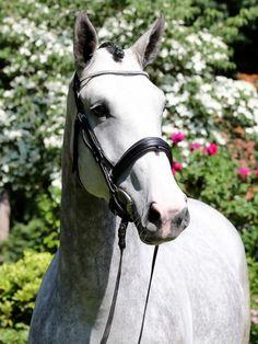 Oldenburg, Show Jumping, Horses, Donkeys, Animals, Character, Animales, Animaux, Donkey