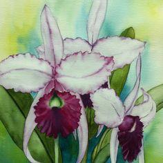 Cattleya: watercolour