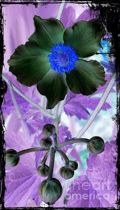 Anemone Flower 2 Mixed Media by Chalet Roome-Rigdon - Anemone Flower 2 Fine Art Prints and Posters for Sale