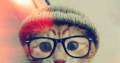 Resultado de imagem para cute pets tumblr