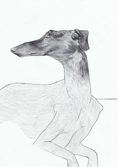 "Alex Badea; Pen and Ink, Drawing ""Greyhound"""