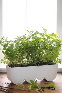 The ÄGGPLANTA planter from IKEA can be used to hold individual potted plants or to plant directly into it and it's narrow enough to sit on a window sill.