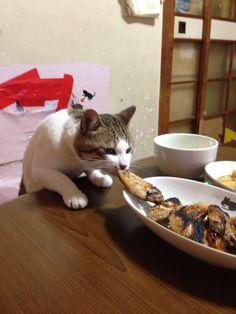 Thieving cat... LOL