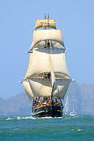 Tall Ship Bounty Sails into San Francisco Bay San Francisco Festivals, Hms Bounty, Old Sailing Ships, Ship Drawing, Pitcairn Islands, San Francisco Bay, Tall Ships, Pirates Of The Caribbean, Lighthouse