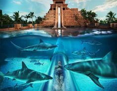 Vodní skluzavka v letovisku Atlantis, Paradise Island, Bahamy ./ Water slide at the Atlantis Resort, Paradise Island, Bahamas Dream Vacation Spots, Vacation Places, Vacation Destinations, Dream Vacations, Places To Travel, Places To See, Yacht Vacations, Summer Vacations, Atlantis Bahamas