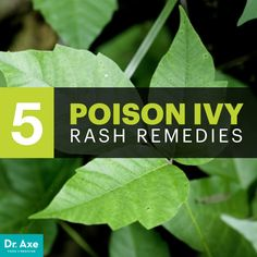 Top 5 Natural Remedies for Poison Ivy Rash - Dr. Axe