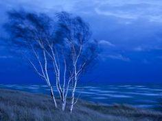 Proshots - Birch Trees, Lake Michigan, St. Ignace, Michigan - Professional Photos from Webshots